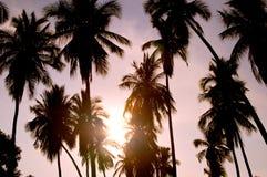 kokosnöten gömma i handflatan silhouettetrees Royaltyfria Bilder