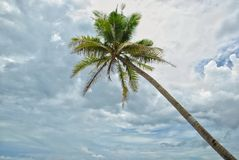 kokosnöten gömma i handflatan skyen royaltyfri foto