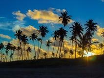 kokosnöten gömma i handflatan solnedgång Royaltyfri Foto