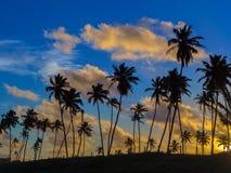 kokosnöten gömma i handflatan solnedgång arkivbilder