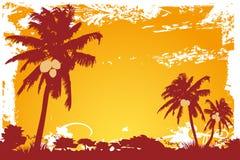kokosnöten gömma i handflatan solnedgångtrees Arkivfoton