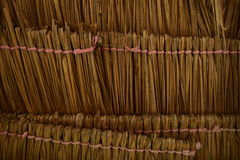 Kokosnöten gömma i handflatan taket stock illustrationer