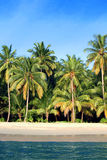 Kokosnöten gömma i handflatan tropiskt paradis Royaltyfria Foton