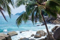 Kokosnöten gömma i handflatan, vaggar och havet i Phuket Fotografering för Bildbyråer