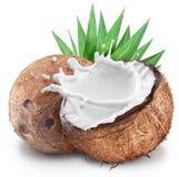 Kokosnöten med mjölkar färgstänk inom arkivfoton