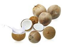 Kokosnöten mjölkar in vitkrämfärgstänk, Fotografering för Bildbyråer