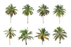 Kokosnöten och palmträd isolerade trädet på vit bakgrund, arkivbild