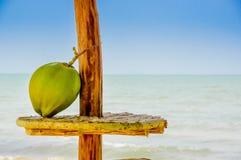 Kokosnöten på en tabell förlägga i barack med havet i bakgrund Royaltyfri Foto