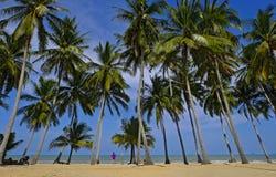 Kokosnöten treen nära stranden och den blåa himlen arkivbilder