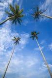 kokosnöten ut gömma i handflatan ne skies till trees arkivfoto