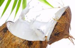 kokosnötfärgstänk Fotografering för Bildbyråer