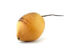 kokosnötfriskhet Fotografering för Bildbyråer