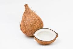 kokosnötfrukt Vektor Illustrationer