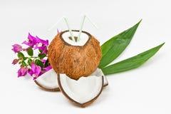 kokosnötfrukt Arkivfoton