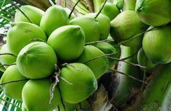 Kokosnötgrupp Arkivbild