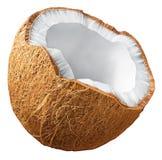Kokosnötillustration vektor illustrationer