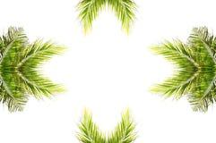 Kokosnötleaves med design på vit bakgrund Fotografering för Bildbyråer