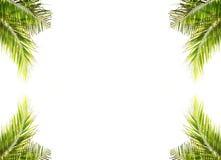 Kokosnötleaves på vit bakgrund Fotografering för Bildbyråer