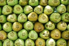 kokosnötmodell Arkivfoton