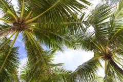 Kokosnötpalmträd över himmelbakgrund i Phuket, Thailand arkivbild