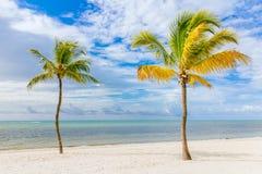 Kokosnötpalmträd Arkivfoto