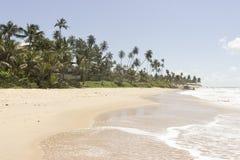 Kokosnötpalmträd - Coqueirinho strand, Conde PB, Brasilien arkivfoton