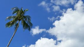 Kokosnötpalmträd i klar blå himmel med moln arkivfilmer