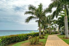 Kokosnötpalmträd inom det gamla sjukhuset parkerar i Montego Bay Jamaica arkivfoton