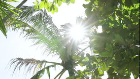 Kokosnötpalmträd mot blå himmel på en tropisk ö Bali, Indonesien stock video