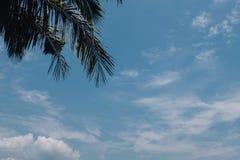 Kokosnötpalmträd och blå himmel Arkivfoto