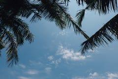 Kokosnötpalmträd och blå himmel Arkivfoton