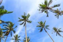 Kokosnötpalmträd och blå himmel royaltyfri fotografi