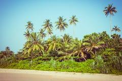 Kokosnötpalmträd och mangrove i vändkretsar Royaltyfri Fotografi