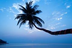 kokosnötpalmträd på den Haad salladstranden royaltyfri fotografi
