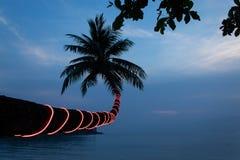 kokosnötpalmträd på den Haad salladstranden fotografering för bildbyråer