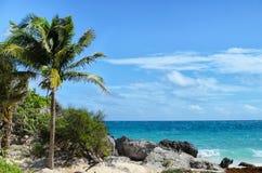 Kokosnötpalmträd på den steniga vita sandstranden på en blåsig dag Royaltyfri Foto