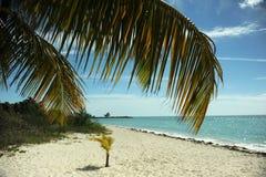 Kokosnötpalmträd på den tomma tropiska stranden Arkivfoto