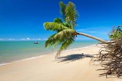 Kokosnötpalmträd på den tropiska stranden Arkivfoto