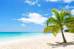 Kokosnötpalmträd på den vita sandiga stranden i den Saona ön, Dominic Fotografering för Bildbyråer