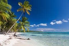 Kokosnötpalmträd på den vita sandiga stranden i den Saona ön, Dominikanska republiken Fotografering för Bildbyråer