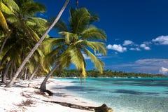 Kokosnötpalmträd på den vita sandiga stranden i den Saona ön, Dominikanska republiken Royaltyfri Fotografi