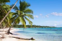 Kokosnötpalmträd på den vita sandiga stranden i den Saona ön, Dominikanska republiken Arkivbild