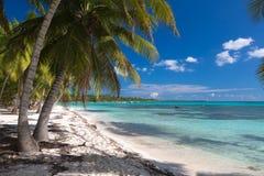 Kokosnötpalmträd på den vita sandiga stranden i den Saona ön, Dominikanska republiken Royaltyfria Bilder