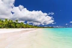 Kokosnötpalmträd på den vita sandiga stranden i det karibiska havet, Saona Royaltyfria Foton