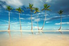 Kokosnötpalmträd på den vita sandiga stranden i Punta Cana, dominikan fotografering för bildbyråer