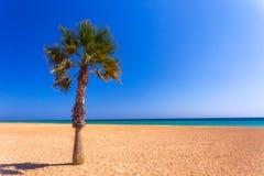 Kokosnötpalmträd på den vita sandiga stranden i Spanien arkivfoton