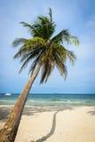 Kokosnötpalmträd på stranden Arkivfoton