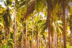Kokosnötpalmträd på stranden på bakgrund för idé för begrepp för semester för solnedgångsommarvår royaltyfri foto