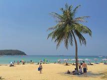 Kokosnötpalmträd på stranden i dagsljuset Royaltyfri Fotografi