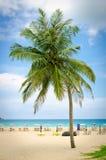 Kokosnötpalmträd på stranden med blå himmel i Phuket, Thailand Royaltyfri Foto